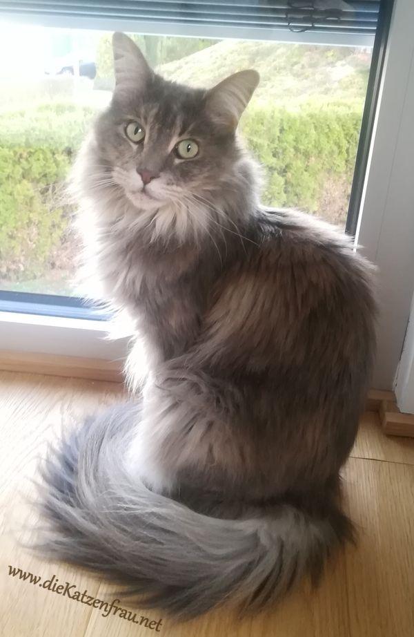 Molly - Katzenbetreuung Wadern