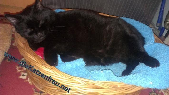 Mikesch- mobile Katzenbetreuung - die Katzenfrau