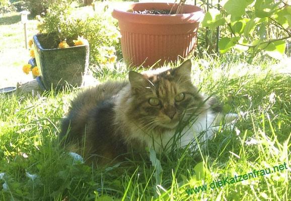 Ein kleiner Döner - Catsitting - die Katzenfrau