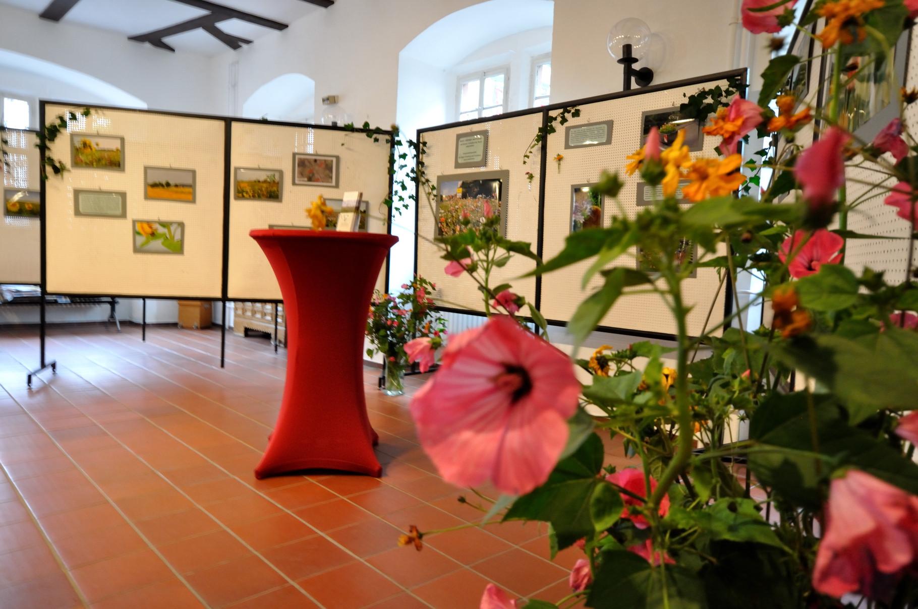 Dokumentation der Blühflächen im Rathaus Grünberg