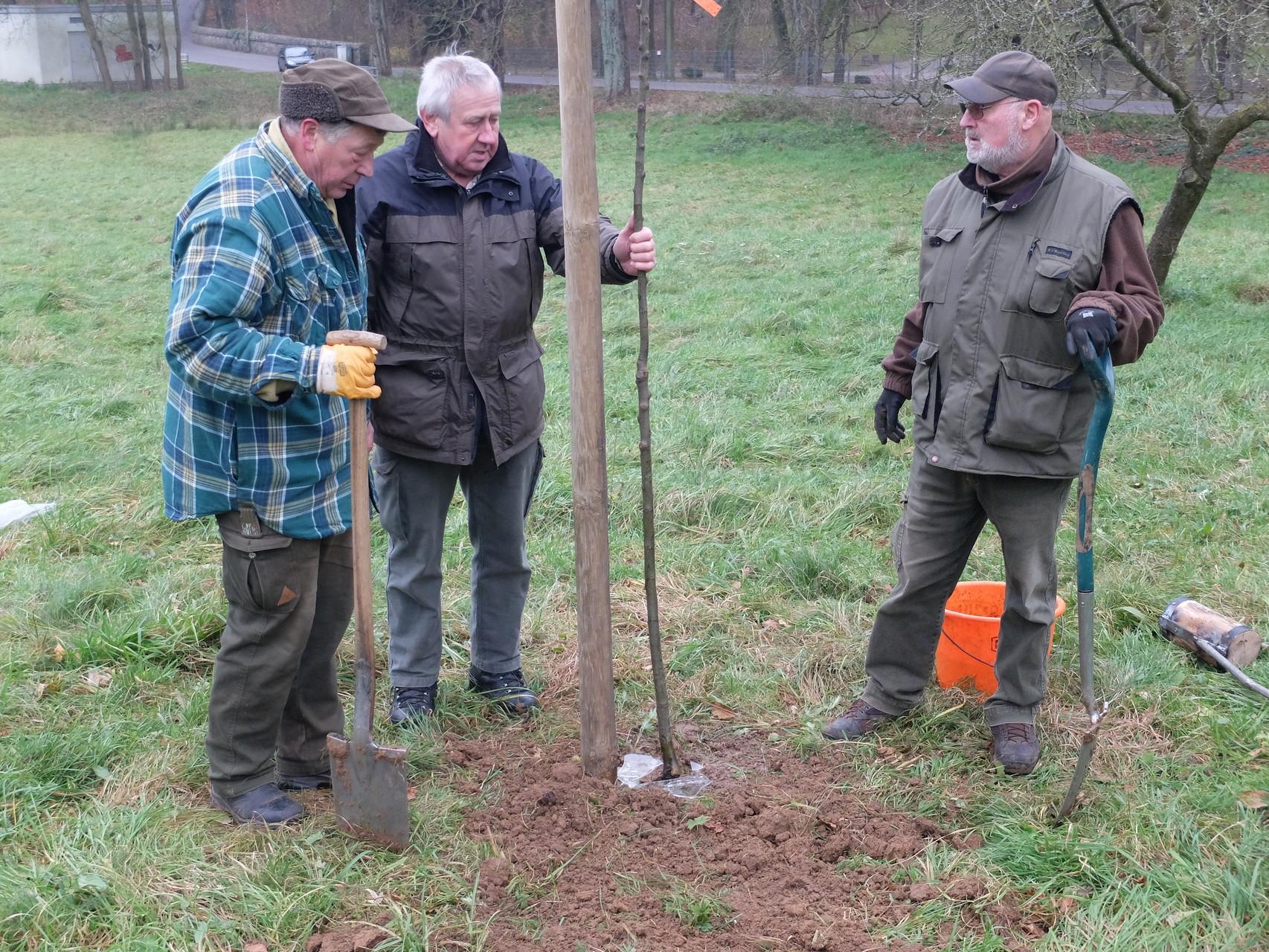 Nachpflanzung von Obstbäumen auf dem Ramsberg Laubach