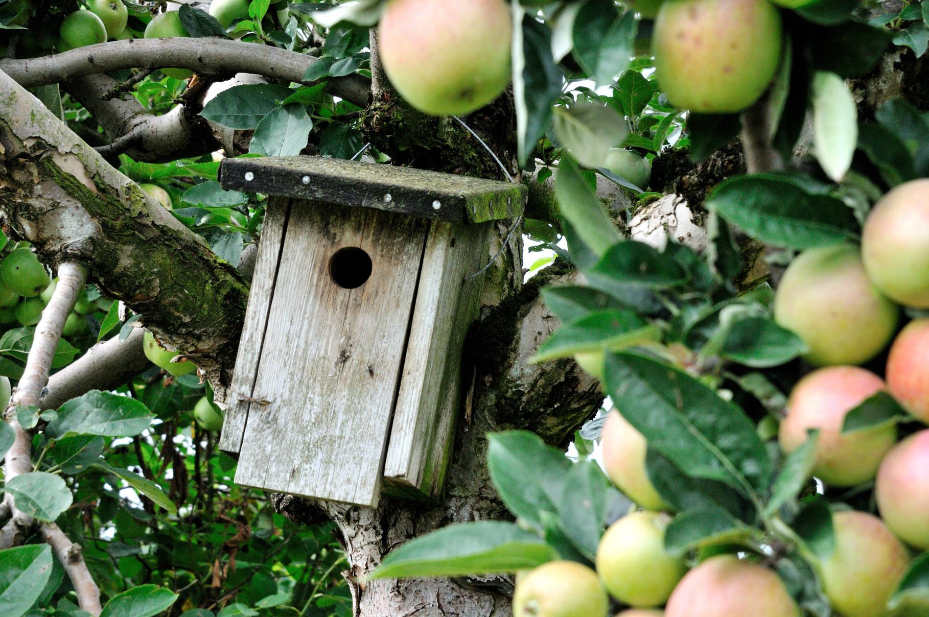 Vögel helfen bei der Vernichtung von Ungeziefer