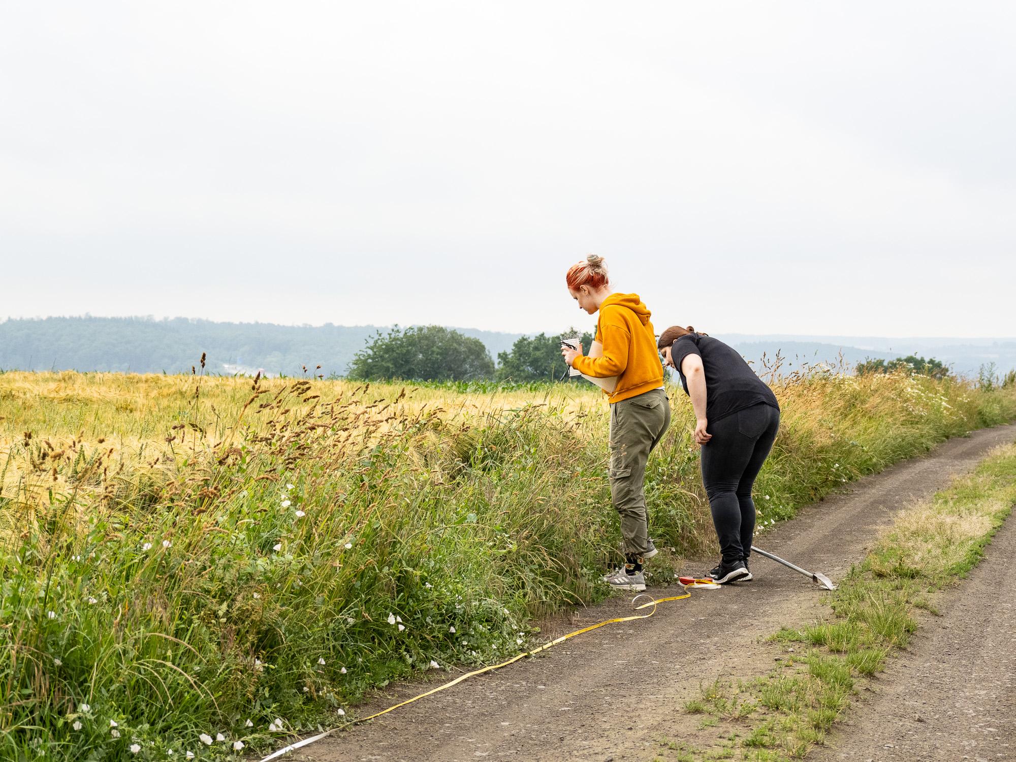 Untersuchung an einem Feldweg