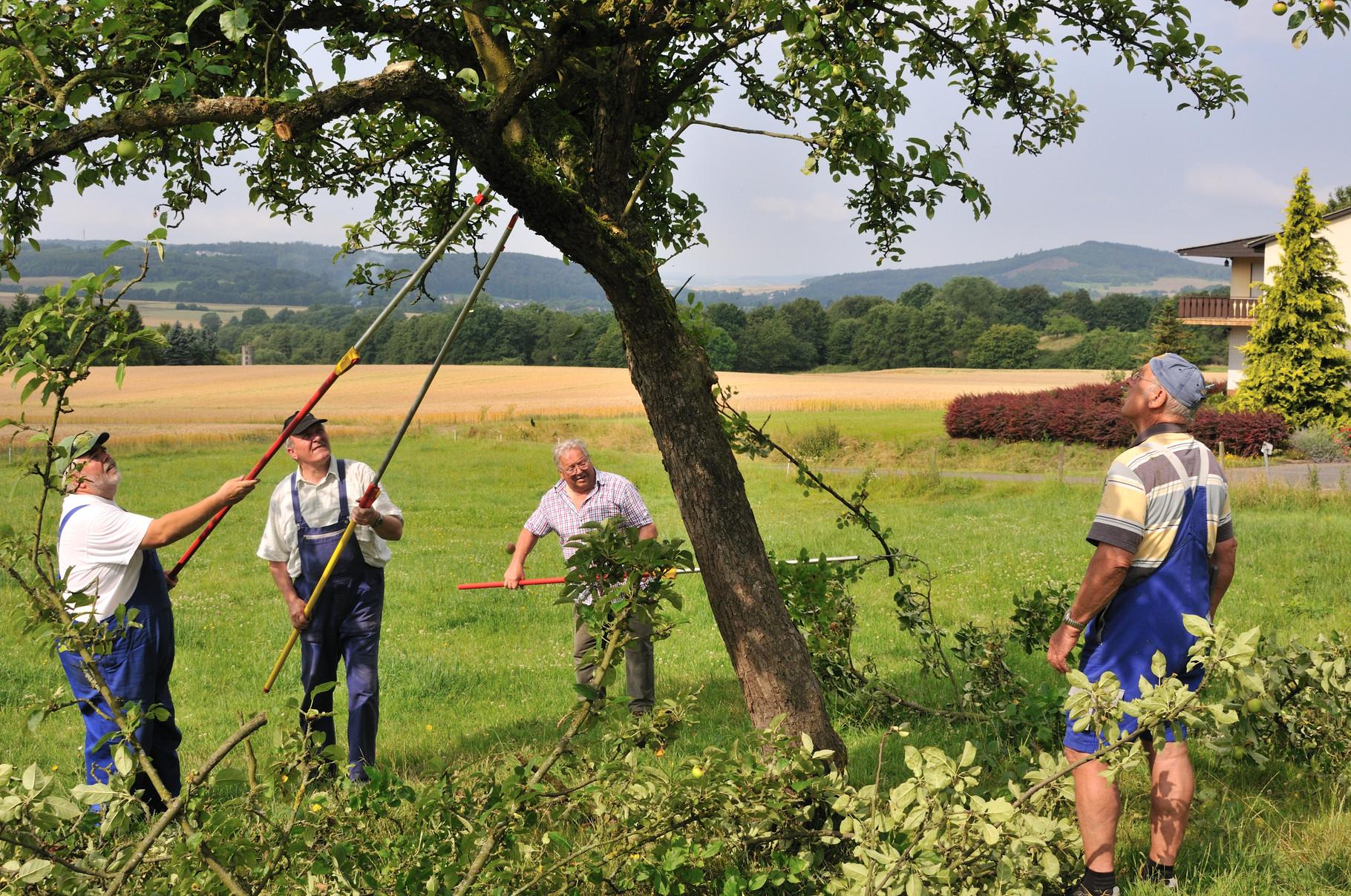 Pflege von Streuobstwiesen in Kooperation mit dem OGV Londorf