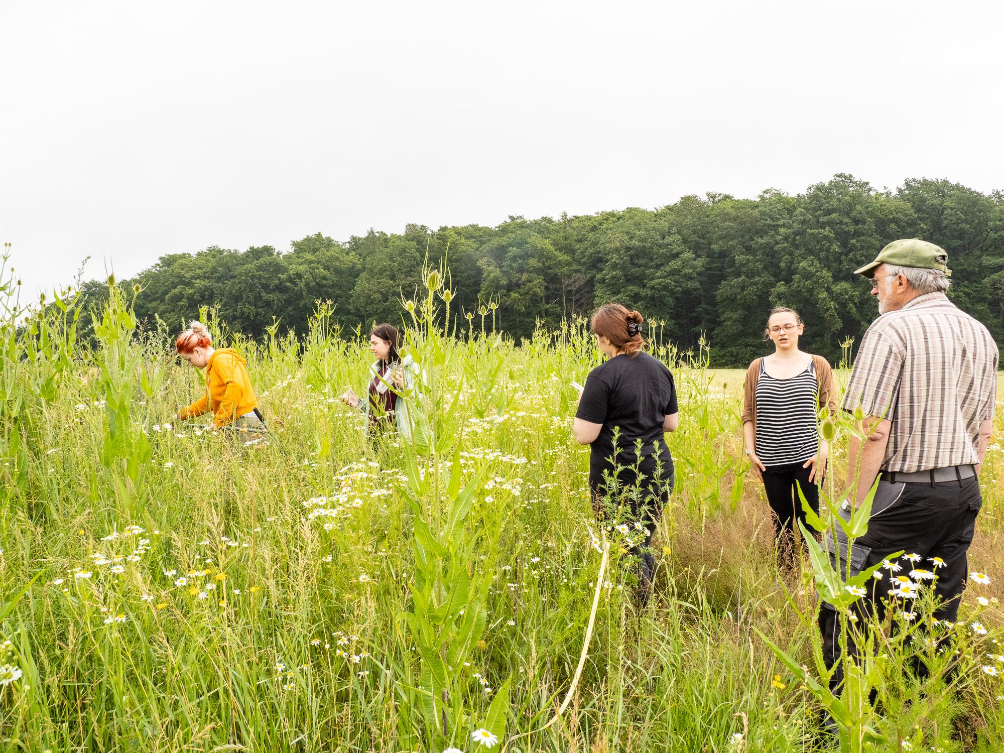 Arbeitsgruppe auf einer Blühfläche