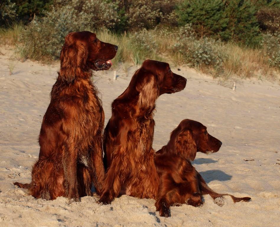 Phelan, Dairin und Hanni