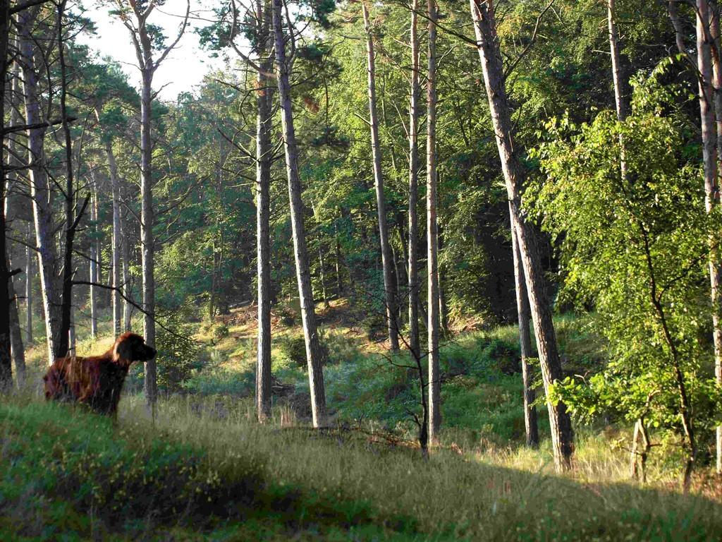 Ein toller Wald!