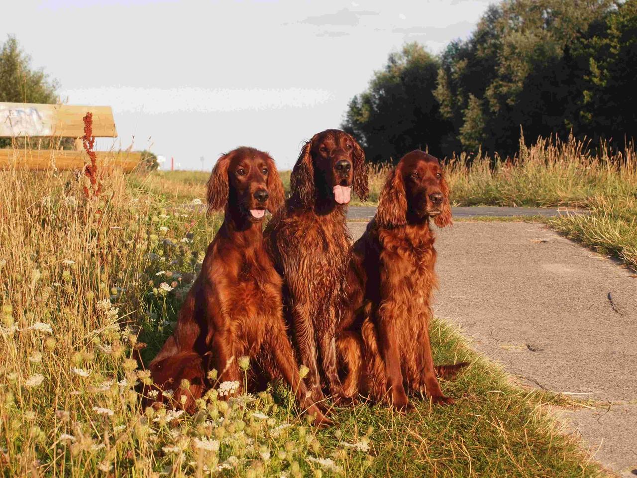 Hanny, Phelan und Dairin
