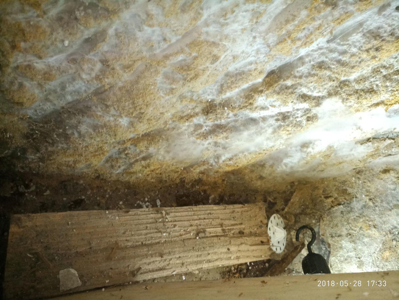 Mérule en pleine activité à saint-gaudens, en haute-garonne, région occitanie