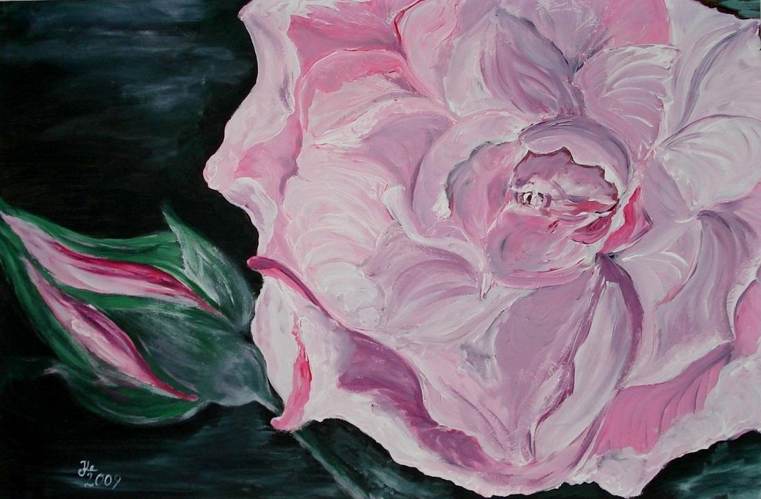 Rose / 57 x 37 cm
