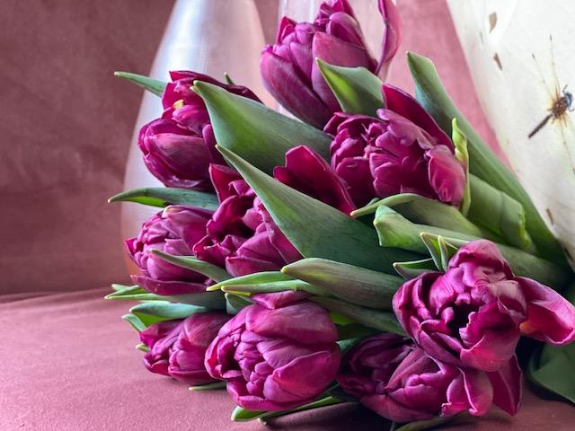 4  Tulpen im Bund, beste Qualität ab 10 € / 10 Stück in verschiedenen Farben