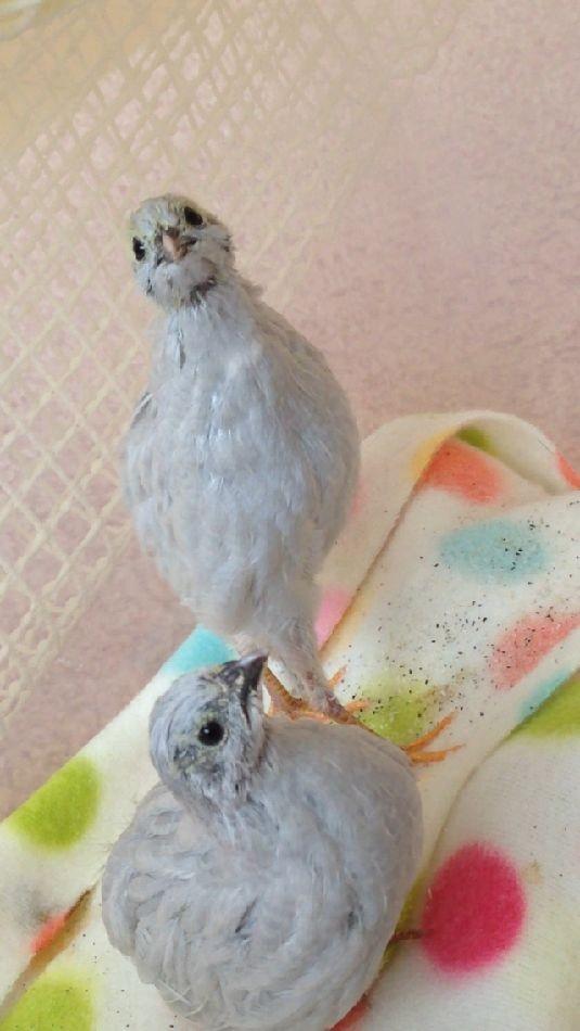 29胸元に白い羽
