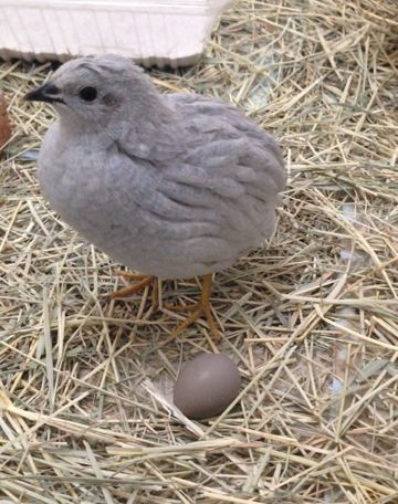 60ハーちゃんと2個目の卵
