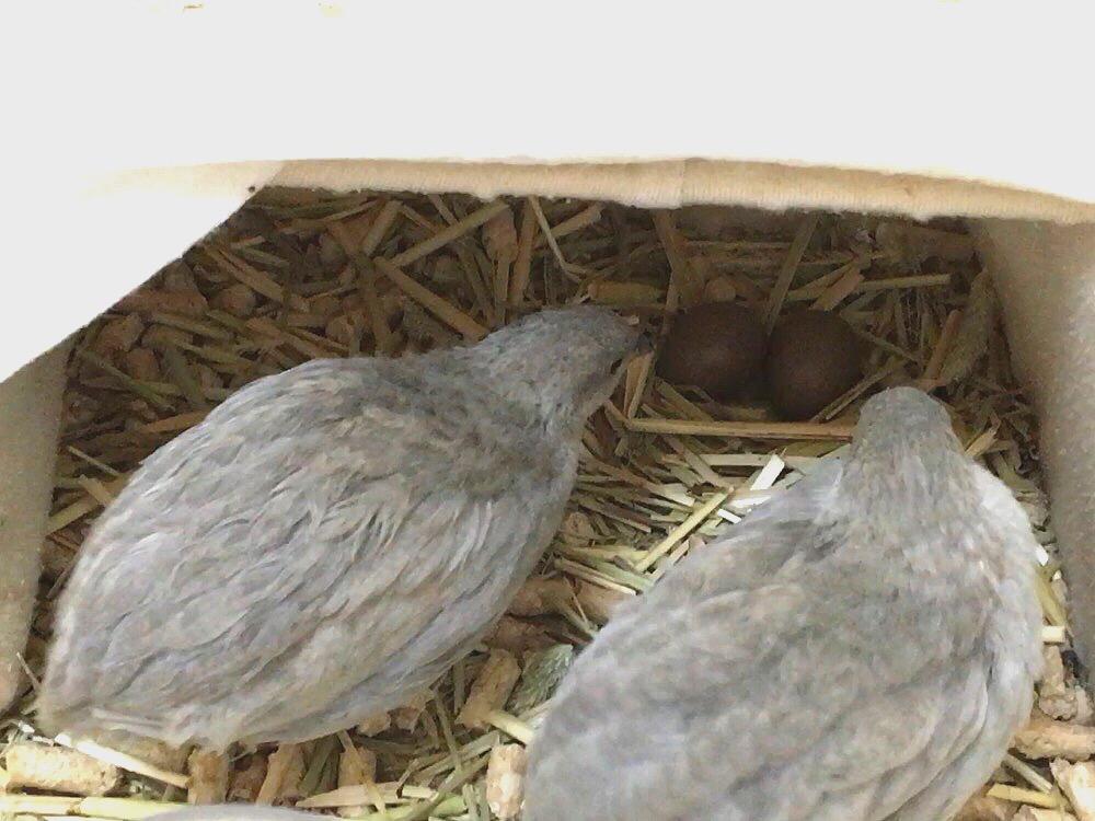 13卵を見守るラブリン&カリメロ