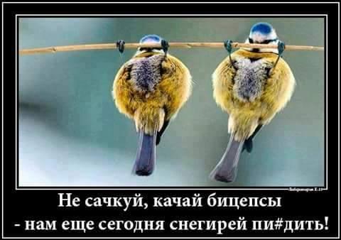 Россияне в ШОКЕ! На службу в ВСУ поступили боевые синички.