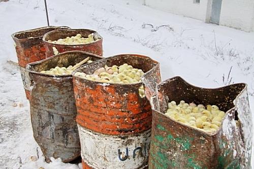 Сотни тысяч живых цыплят скидали в бочки, и заливали водой, на морозе. Людям не раздавали.