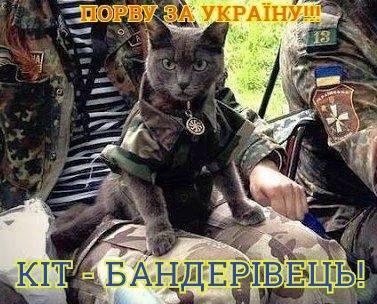 Сепарские мыши в ШОКЕ! На службу в ВСУ поступили боевые коты! Мышам - КАПУТ !!!