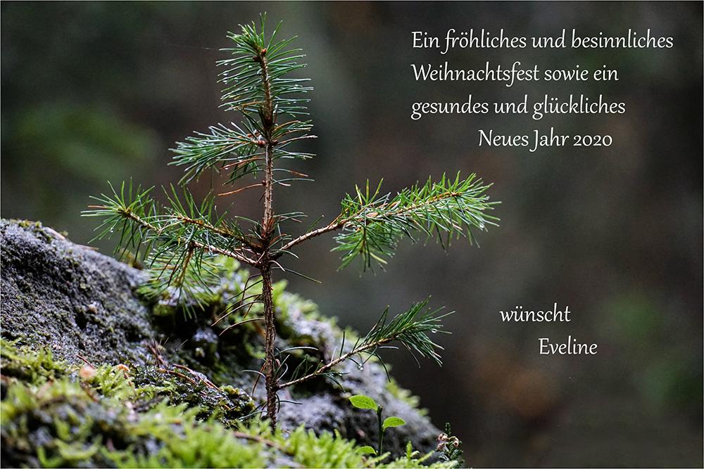 Eveline Hollstein