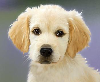 犬の飼い方の前に子犬選びから学ぼう