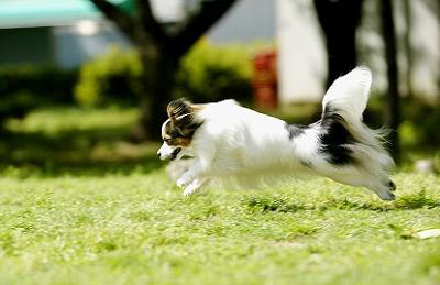 犬がどんなに夢中で遊んでいても、一発で呼び戻せるようにしたい