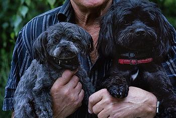 (犬と人間は家族!まずはしっかりと信頼関係を育もう)