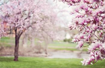 ポメラニアンの春の過ごし方