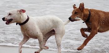 数頭家にいると犬も強気になる事がある。