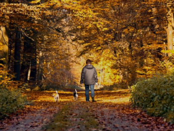 ポメラニアンの秋の過ごし方