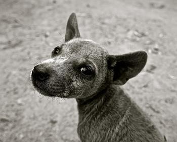 あらゆる場面で融通が利く犬のしつけ「マテ」