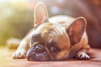(今は室内で犬と一緒に暮らす事が当たり前!)