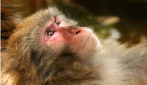 サルキ(猿期)