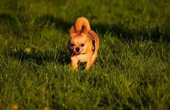 どの犬にも吠える子はトラブルに巻き込まれます