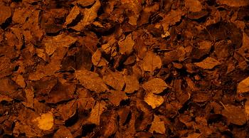 (フィラリアに限らず、土や木の葉の多い場所に注意)