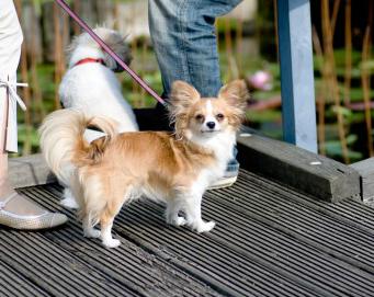 キャッチアイウォークは飼い主と犬を繋ぐ大切なしつけ