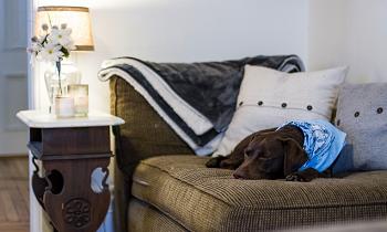 室内犬との暮らし方
