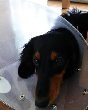 犬を飼っていると誰もが必ず病気を経験する
