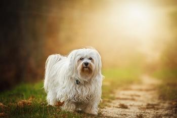 (犬には悪い事よりも、良い事を理解させる)