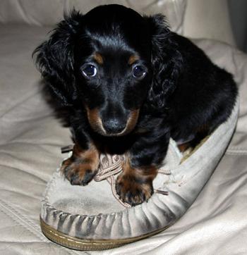 子犬期~成犬期で一番気を付けるべき事。
