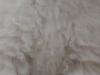 ホワイトの毛色