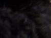 ブラックの毛色
