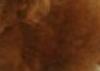 レッドの毛色