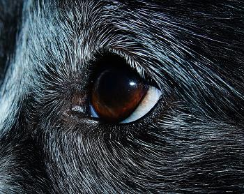 (目が大きい犬は目の病気に要注意!!)