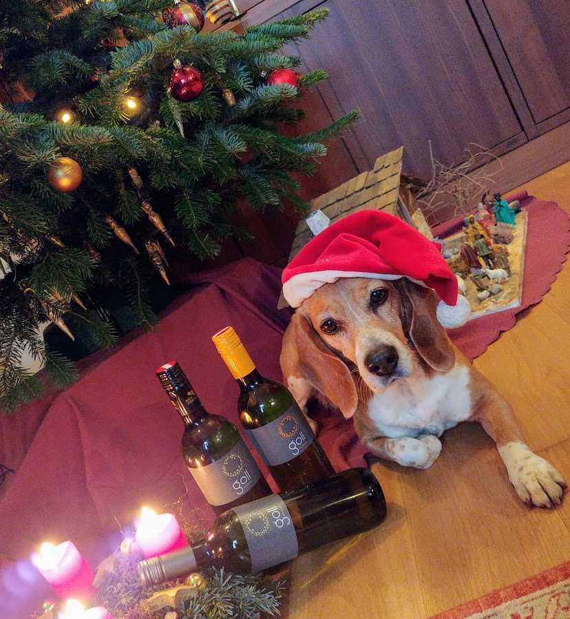 Nora und Wein...