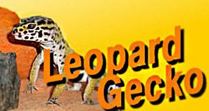 Logo-Leopardgecko 300x160