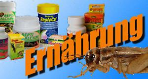Logo-Ernährung 300x160