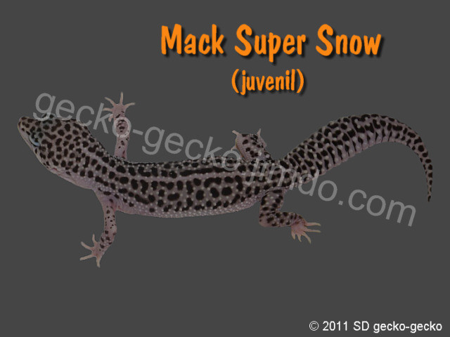 Mack Super Snow juvenil