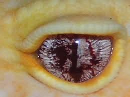 Marble Eye 02 Baronak