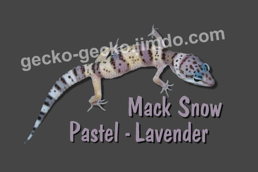 Mack Pastel