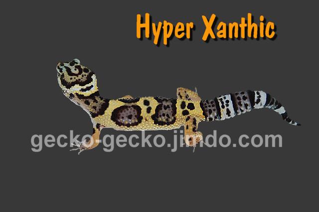Hyper Xanthic