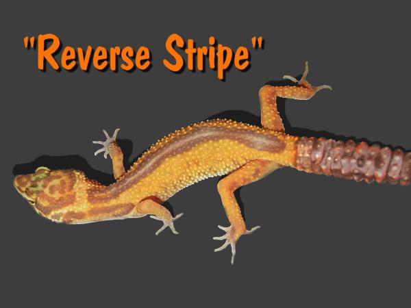 Reverse Stripe